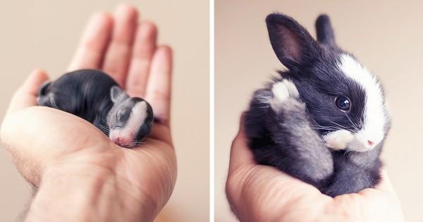 Δείτε τον πρώτο μήνα ζωής ενός νεογέννητου κουνελιού μέσα από αυτές τις υπέροχες φωτογραφίες! (Εικόνες)