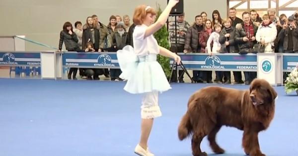 Αυτή η γυναίκα αρχίζει να χορεύει, δείτε όμως τι κάνει ο σκύλος μαζί της! Πραγματικά απίθανο! (Βίντεο)