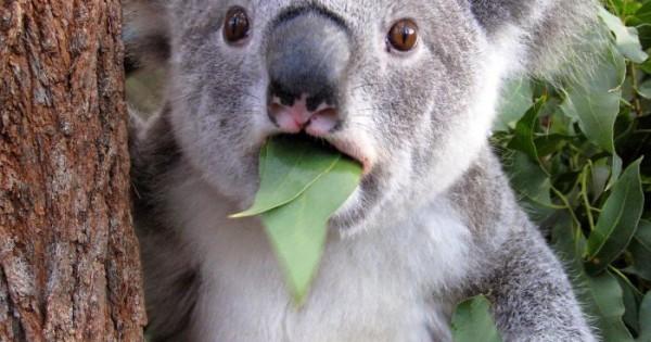 Ζώα με την έκπληξη στο πρόσωπό τους! (Φωτογραφίες)
