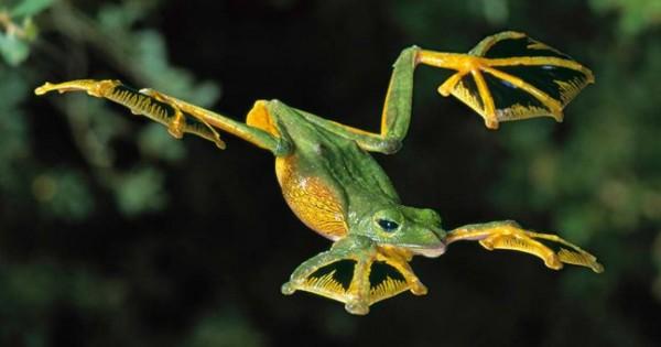 Θαυμαστά ιπτάμενα ζώα εκεί που δεν το περιμένεις