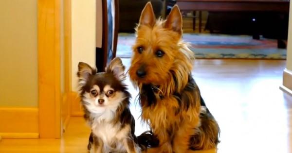 Ρωτάει τα σκυλάκια της ποιο από τα δυο τα… έκανε στην κουζίνα. Η αντίδραση τους θα σας κάνει να γελάσετε! (Βίντεο)
