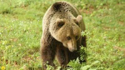 Μια αρκούδα… και ένας άνθρωπος!  (βίντεο)