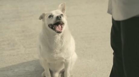 Τι κερδίζεις αν ταΐσεις έναν αδέσποτο σκύλο; (Βίντεο)