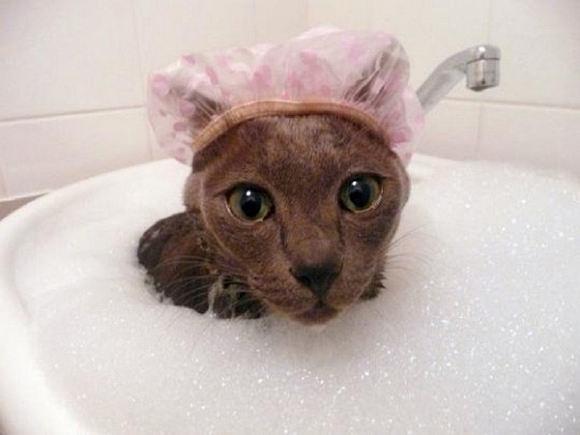 νερό μπάνιο γάτες Γάτα