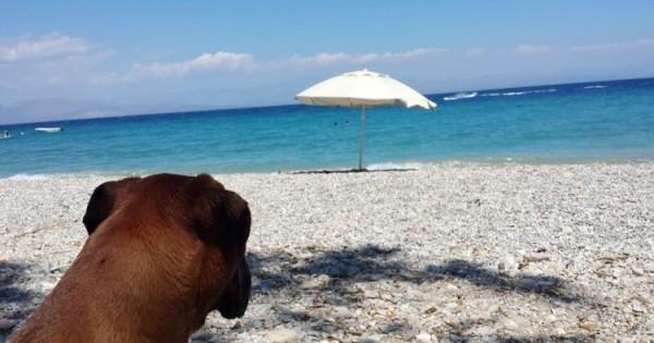 10 συμβουλές για να προστατέψετε τον σκύλο σας από τη ζέστη