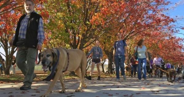 Σκύλοι με μπαντάνες: Εκατομμύρια πατούσες πάνε για παγκόσμιο ρεκόρ!