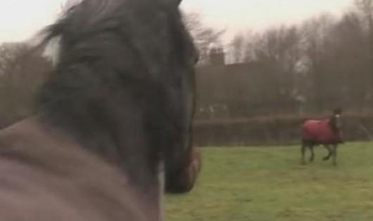 Αυτά τα άλογα συναντήθηκαν ξανά μετά από χρόνια. Δείτε το συγκινητικό βίντεο με τις αντιδράσεις τους!