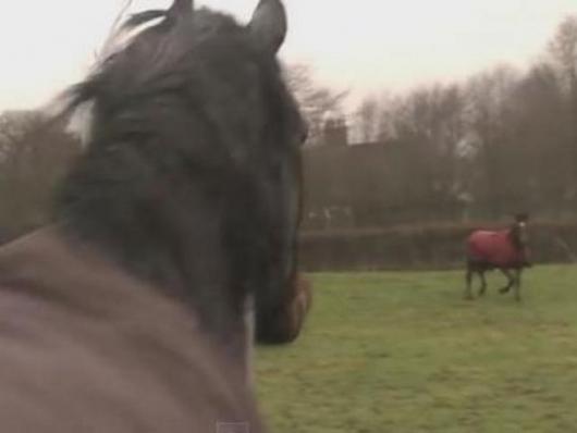 φιλία άλογα