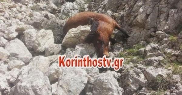 Εκτέλεσαν 8 άγρια άλογα στην Ζήρεια Κορινθίας (σκληρές εικόνες)