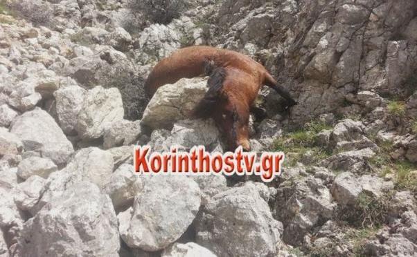 δολοφονία άλογα