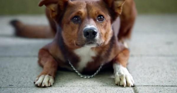 Διαφημιστικό για Όσκαρ: Ο πιστός σκύλος ακολουθεί την καρδιά του αφεντικού του