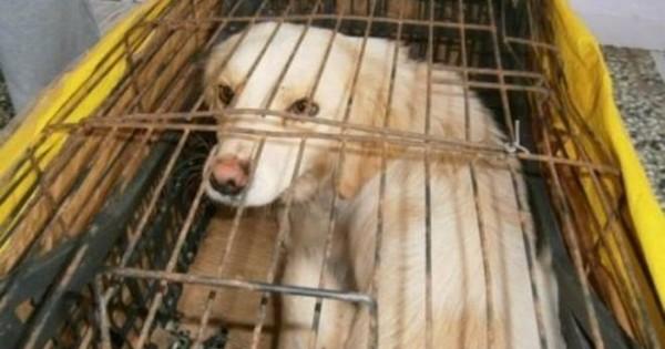 Συγκλονιστικό! Κτήνη εναντίον ζώων (photos)