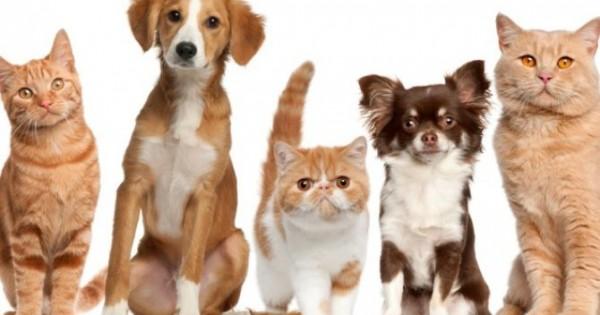 Διάλεξες το σκύλο ή τη γάτα που σου ταιριάζει;