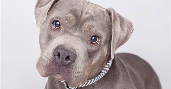 Το σκυλί που βοήθησε ένα παιδί με αυτισμό να αγκαλιάσει τη μητέρα του