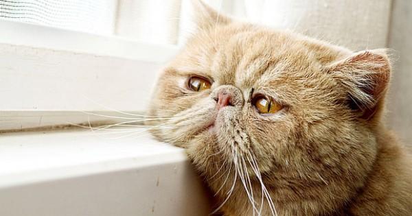 Κινδυνεύουν τα ζώα μας όταν τα αφήνουμε πολλές ώρες μόνα τους