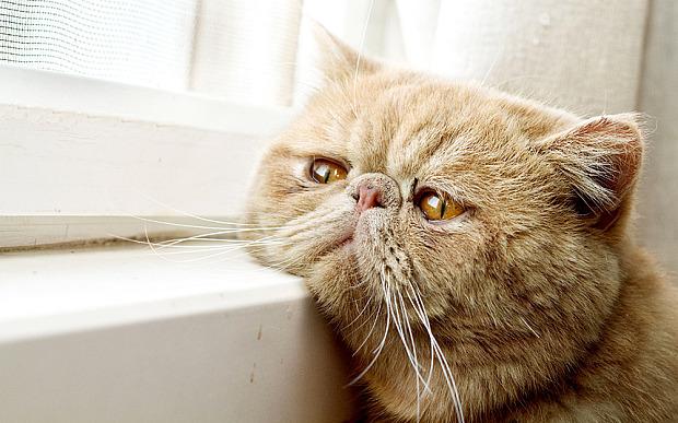 κατοικίδια ζώα Άγχος αποχωρισμού άγχος
