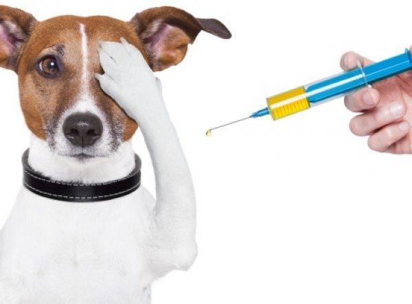 Σκύλος κατοικίδια εμβολιασμός εμβόλια Γάτα