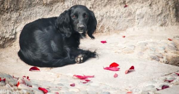 Συγκλονιστικό βίντεο για την εγκατάλειψη των σκύλων!