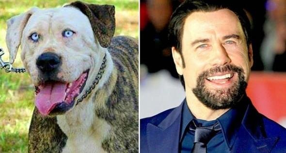18 διάσημοι που έχουν δίδυμο σκύλο!