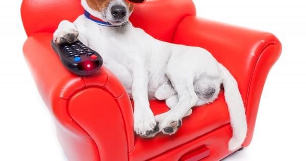 Ένα κανάλι τηλεόρασης μόνο για σκύλους!