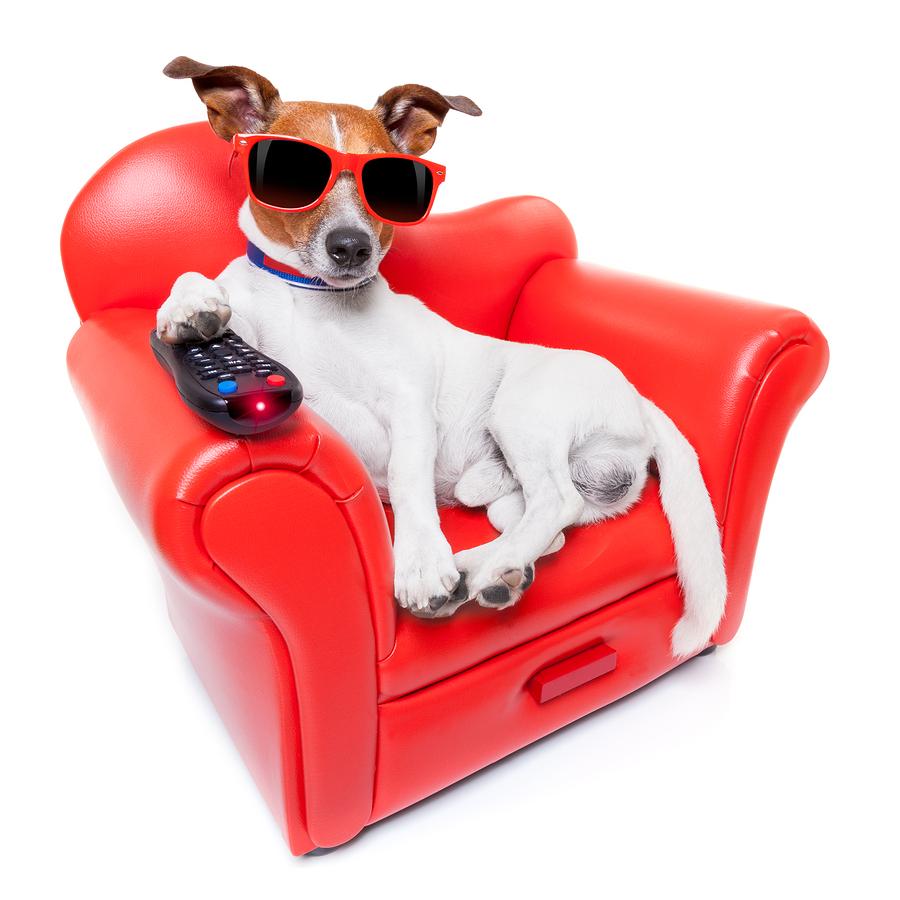 τηλεόραση Σκύλος DOG TV