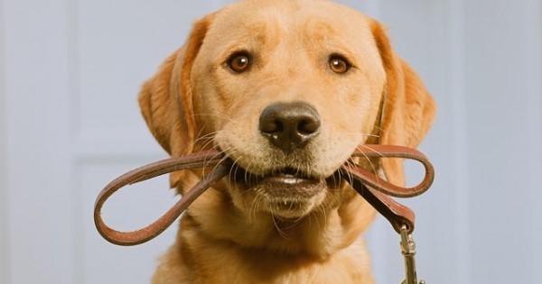Δέκα πράγματα που μας μαθαίνουν τα ζώα για τις ανθρώπινες σχέσεις