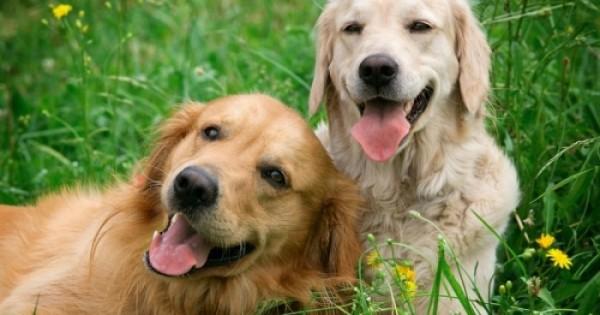 Οι σκύλοι κλέβουν την καρδιά μας με τα… μάτια τους!
