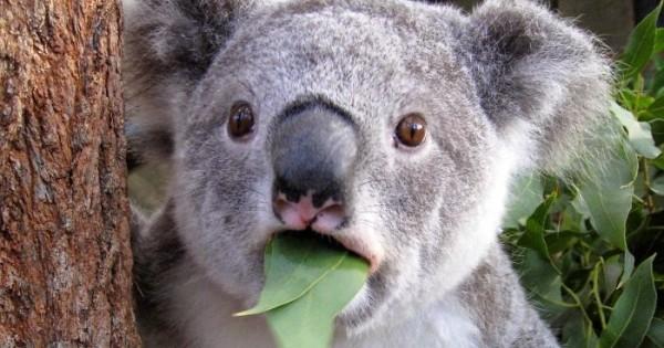 Ζώα με την έκπληξη ζωγραφισμένη στο πρόσωπό τους! (εικόνες)