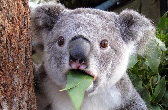 ζώα έκπληξη