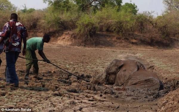 ελέφαντας Εικόνες