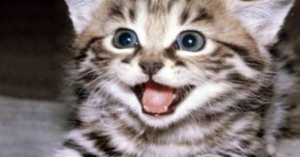 Μπορούν οι γάτες να επικοινωνούν με τους ανθρώπους;