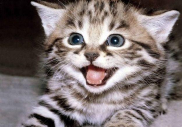 επικοινωνία γάτες άνθρωπος