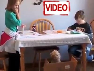 Σκύλος κουτάβι κοριτσάκι κλάμα δώρο
