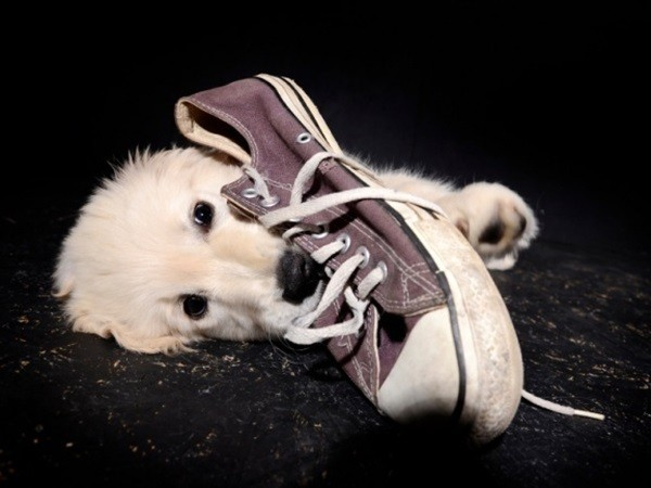 Σκύλος μασούλημα μασουλάει