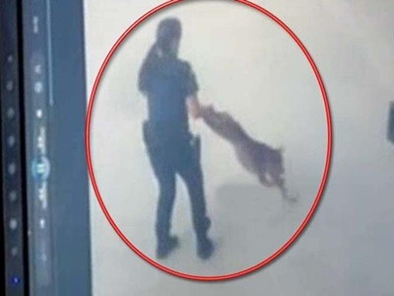 Σκύλος πίτμπουλ Θεσσαλονίκη