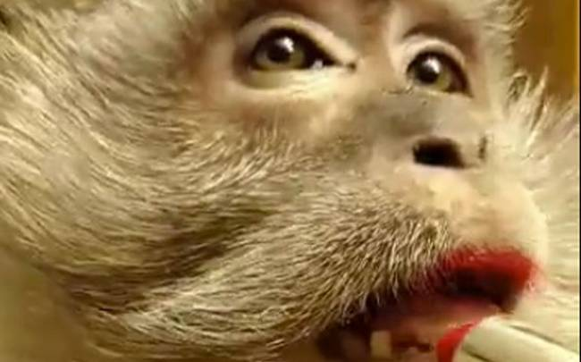 make-up-monkey1