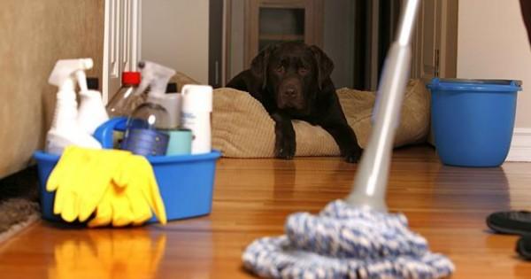 Πρώτες βοήθειες σκύλου: Επαφή με οξέα ή ισχυρά καθαριστικά. Τι πρέπει να κάνεις