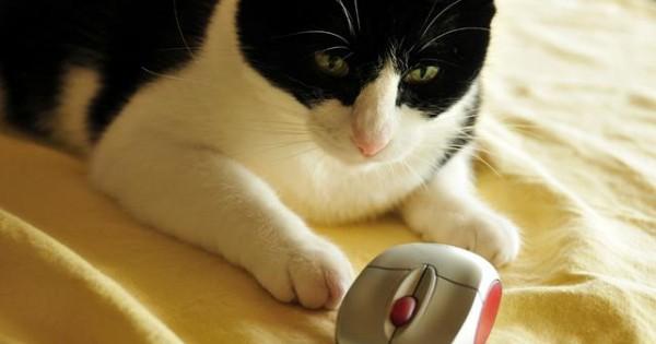 Άσε το ποντίκι μου ήσυχο! (video)