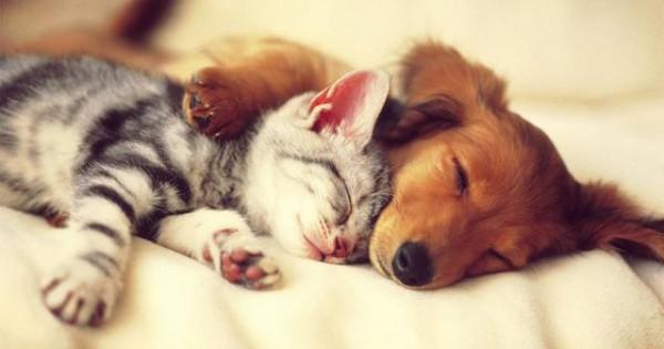 Δείτε την συγκινητική ιστορία ενός σκύλου και μία γάτας