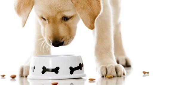 Τι πρέπει να γνωρίζεις για τη σωστή διατροφή του σκύλου σου