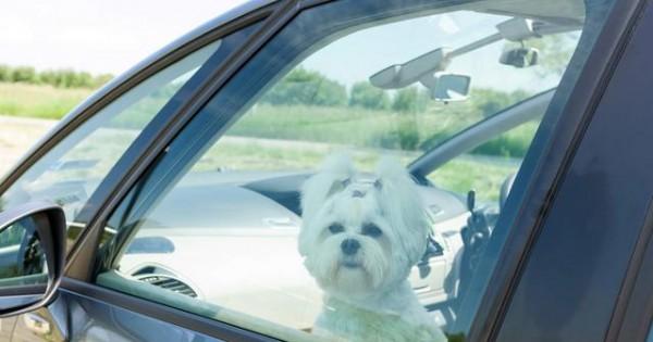 Έσπασε το τζάμι αυτοκινήτου για να σώσει ένα σκυλάκι και τελικά… συνελήφθη (βίντεο)