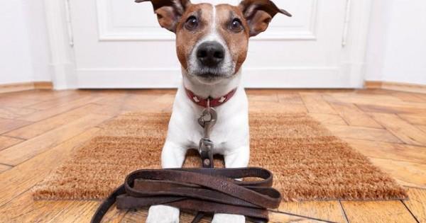 Τι κάνουν οι σκύλοι στο άκουσμα της λέξης… βόλτα; (βιντεο)
