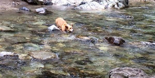 Δείτε μια δραματική διάσωση σκύλου από τα νερά ορμητικού χειμάρρου (βιντεο)