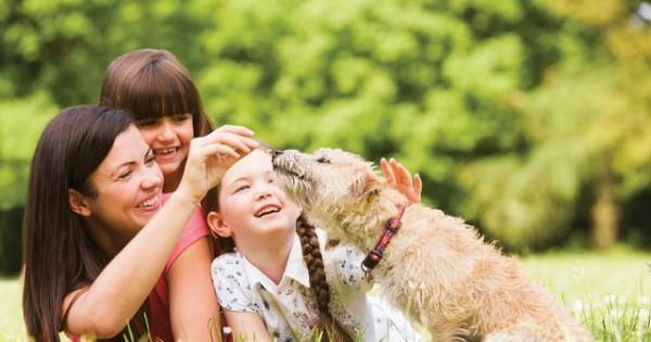 12 μύθοι που ταλαιπωρούν σκύλους και ανθρώπους