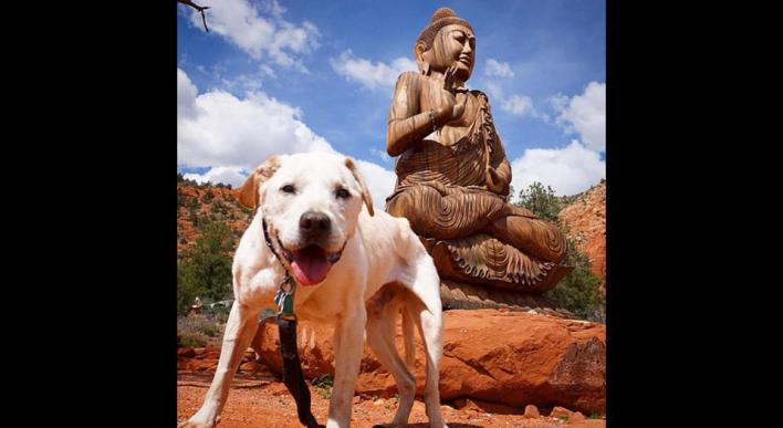 ταξίδι Σκύλος δώρο