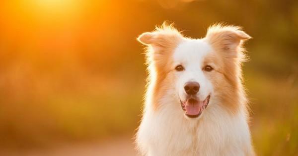 Αφήνεις τον σκύλο σου έξω, στο κρύο ή τη ζέστη; Έχεις ένα χρόνο φυλακή