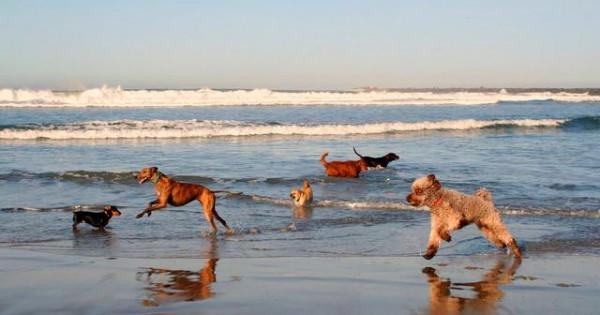 Προσοχή στα παραπλανητικά δημοσιεύματα! Τα σκυλιά δεν επιτρέπονται (ακόμα) στις παραλίες