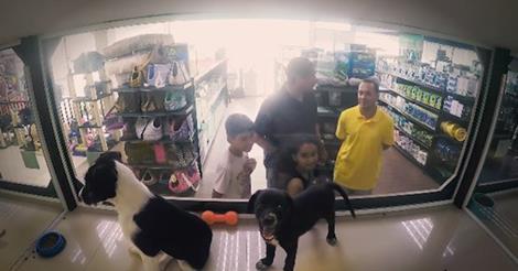 Γιατί ένα pet shop αντικατέστησε, μυστικά, τα ζώα προς πώληση με αδέσποτα;
