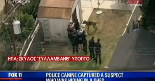 Αστυνομικός σκύλος συλλαμβάνει ύποπτο on camera! (βιντεο)