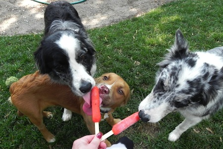 Φτιάξτε παγωμένες λιχουδιές για το σκυλάκι σας
